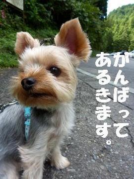 える滝.JPG